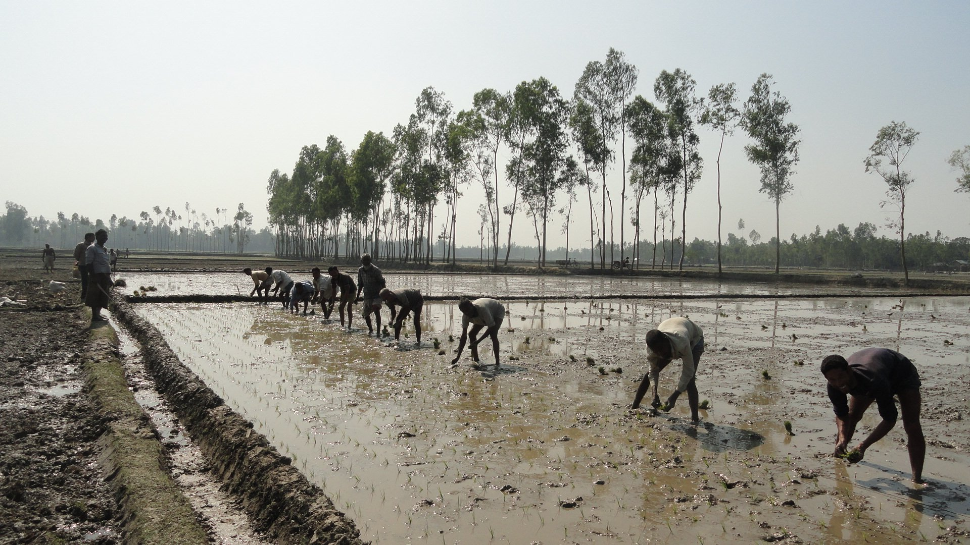 """Press Release: Evidence Action and RDRS Bangladesh announce partnership on """"No Lean Season,"""" to reduce seasonal income insecurity."""